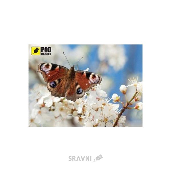 Фото PODMЫSHKU Весна-Бабочка