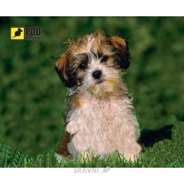 PODMЫSHKU Лохматый щенок
